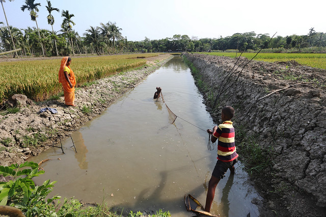 Gher Aquaculture  in Khulna, Bangladesh. Photo by M. Yousuf Tushar, 2014