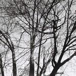 Tree in autumn, 2