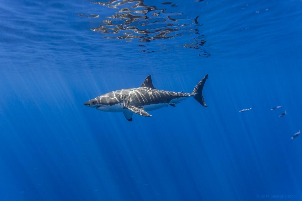 nejnebezpečnější zvířata světa žralok