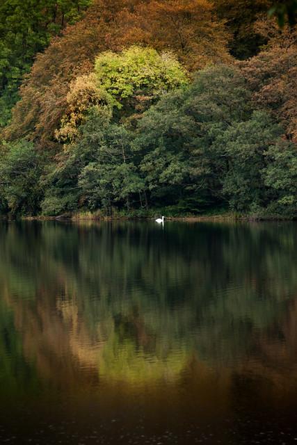 3701 Grasmere Swan