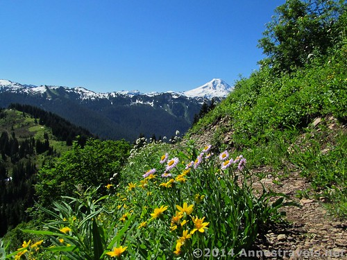 Wildflowers on Canyon Ridge, Mount Baker-Snoqualmie National Forest, Washington