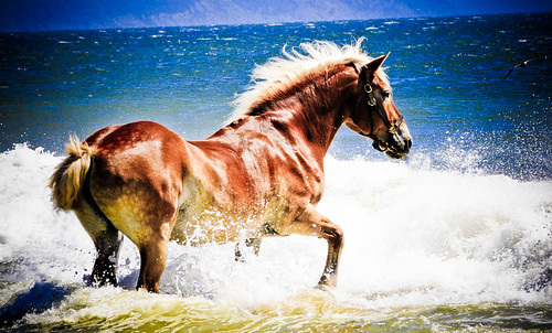 Horse ... nice day for a swim | by tibchris