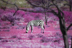 Once Upon a Time in Kenya - 7 - | by Ben Heine