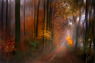 ~~~ fairy tale forest ~~~ | by jmb_germany
