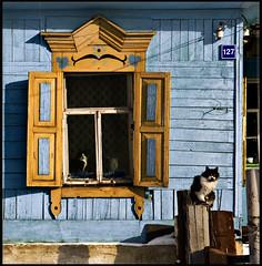 Russia - Cats in Irkutsk