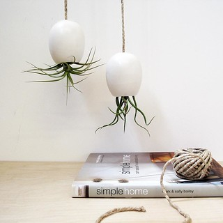 matte white hanging air plant pods | by Michael McDowell (mudpuppy)