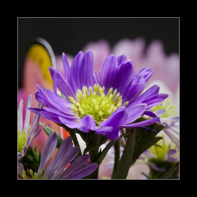 FLOWER-POWER  Flickr