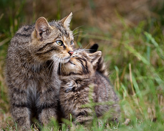 Big Cat, Little Cat | by PeteDenness