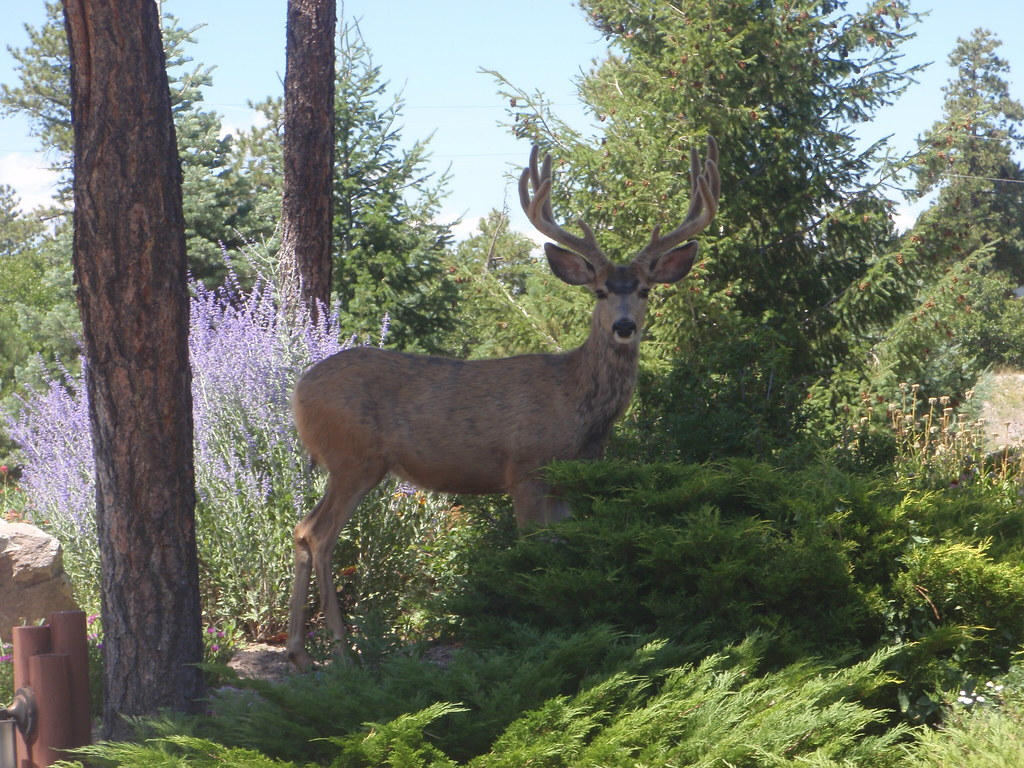 how to keep deer out of your garden. Photo CC License Credit Heath A On Flickr. How To Keep Deer Out Of Your Garden