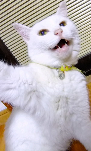 猫、怒っています。