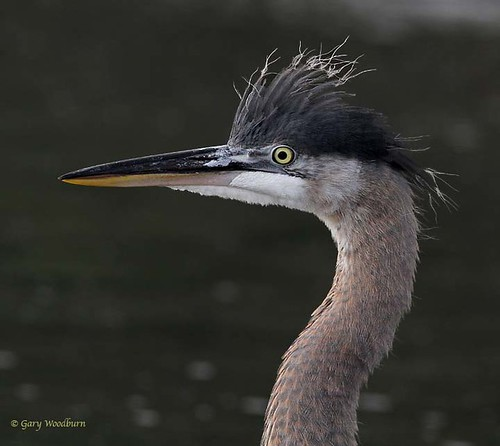 Bad Hair Day | by FreeSpirit5
