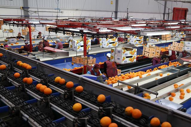 12-051217 Visita Cooperativa Productores del Campo de Alcala del Río