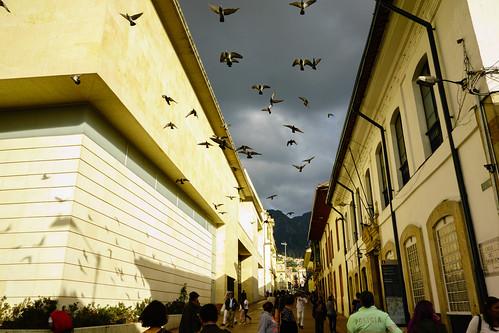 Pigeons, Bogota, Colombia