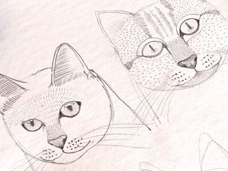 Kitty sketches | by Geninne
