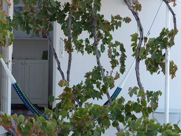 vigne et hamac