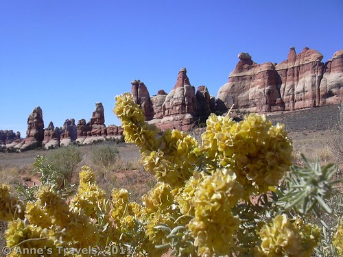Wildflowers in Chesler Park, Needles District of Canyonlands National Park, Utah