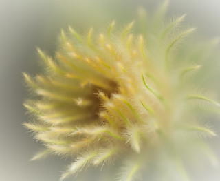 Soft feathery flower thing ~ | by Izzy Standbridge