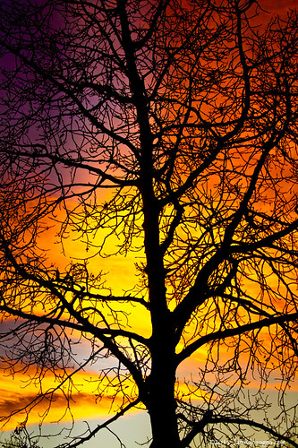 Colorful Silhouettes | by Striking Photography by Bo Insogna