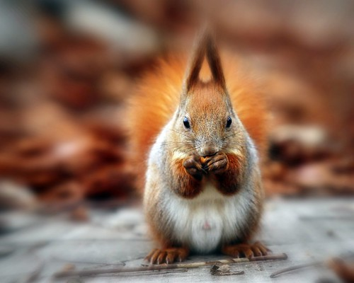 Nuts | by red R