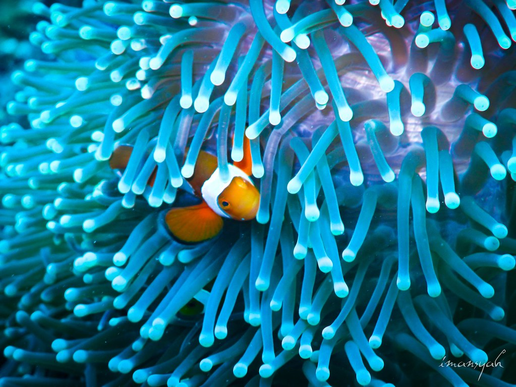 My First Nemo Shoot