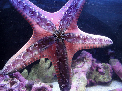 Henry Doorly Zoo - Sea Star