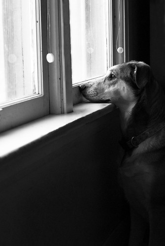 Dog looking out window | by Doguu