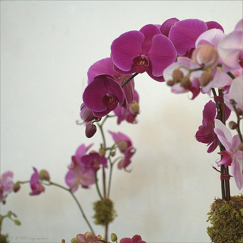 Orchideons | by NYCandre