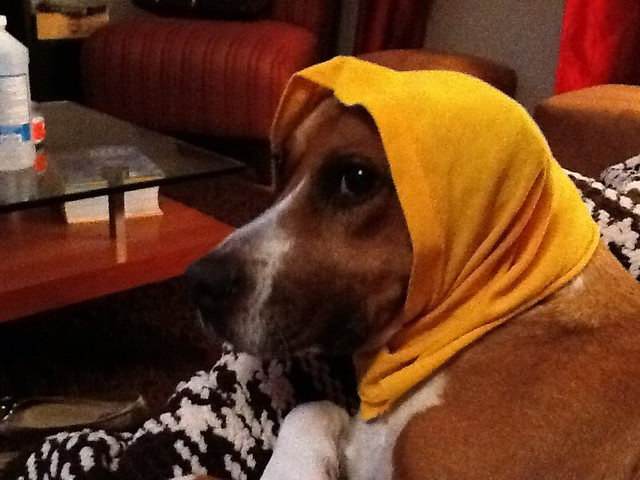 Ippa - babushka style. Subtitled: yes the iPad camera is that bad