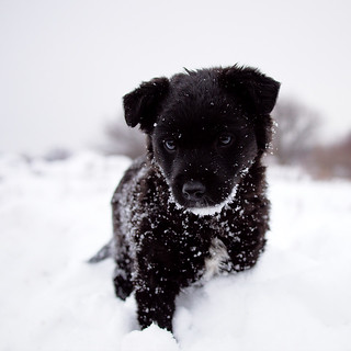 Black Puppy on White Snow | by Olgierd Pstrykotwórca
