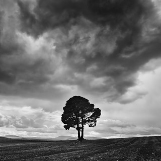 The Lonely Tree | by DavidFrutos