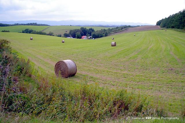 牧草ロールのある風景①