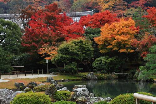 Pemandangan momiji di Kyoto: Kuil Ryoanji