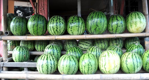 SHINING WATERMELONS | by whologwhy
