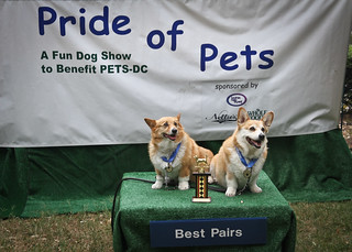 Pride of Pets 2011 | by borderstan
