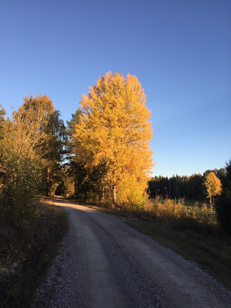 Sweden in Oktober