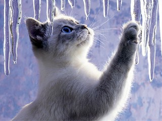 ice-cat-cats-31471539-1600-1200