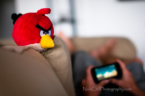 Angry Bird Coaching | by Nick Chill Photography