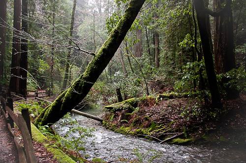 Muir Woods, California - December'10 | by Olenka303