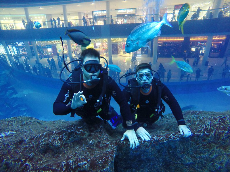 Dubai Mall Aquarium scuba dive