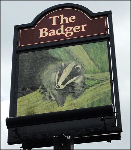 Chesterfield ... 'The Badger' - threatened species, badgers and pubs. | by bazzadaramblerimages
