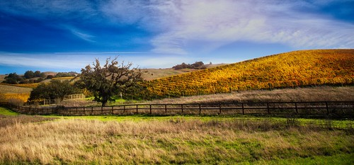 Fall in Sonoma County