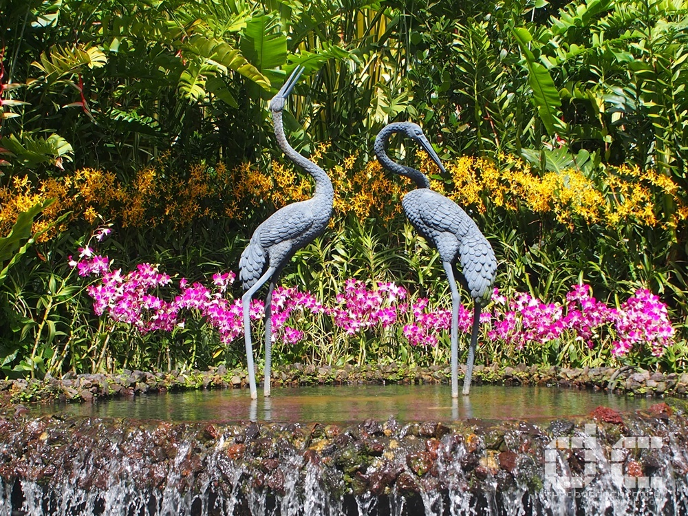 botanic garden, places of interest, singapore, singapore botanic garden, unesco,  where to go in singapore, national orchid garden,orchid,crane fountain