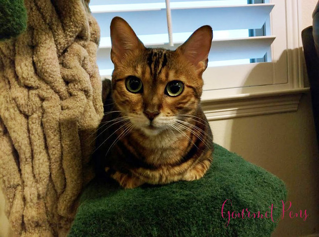 Whiskers & Paws December 2017 Edition 1
