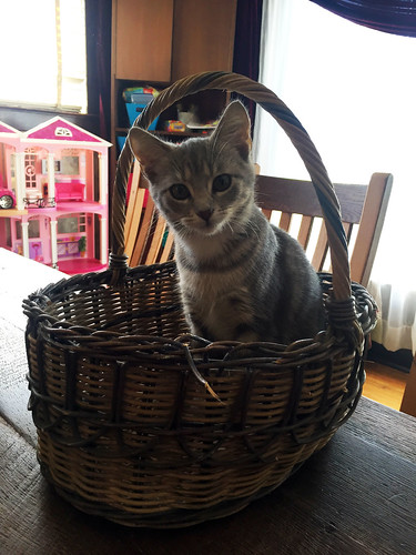 Mabel in a basket