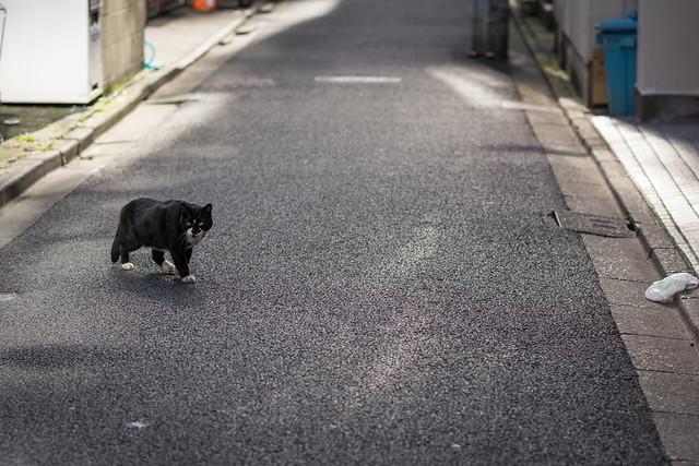 路地で出会ったネコ