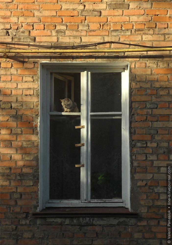 20160930_novik_cat_001