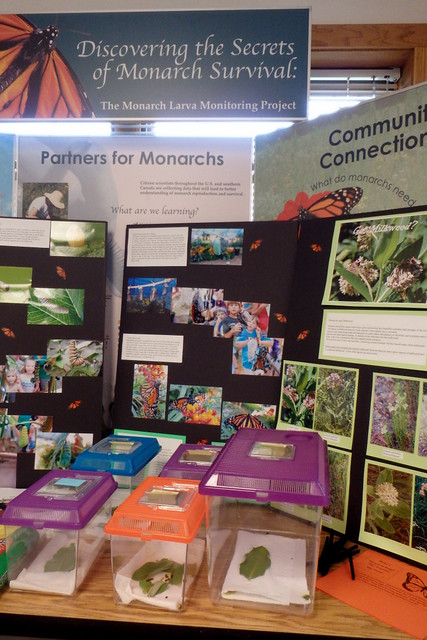 monarch butterfly informational panels and five rearing containers