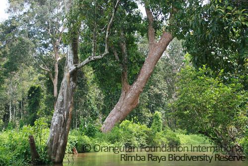 Rimba-Raya-Biodiversity-Reserve_wm