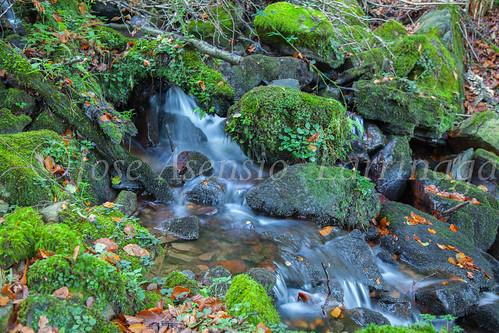 Parque Natural de #Gorbeia #DePaseoConLarri #Flickr      -1424