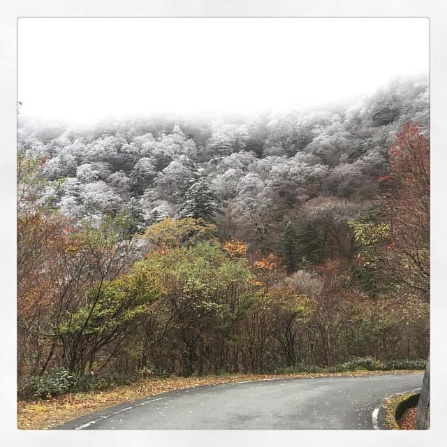 「霧氷」 景色が開けた午後。 #石鎚山 #ドライブ #ufoライン